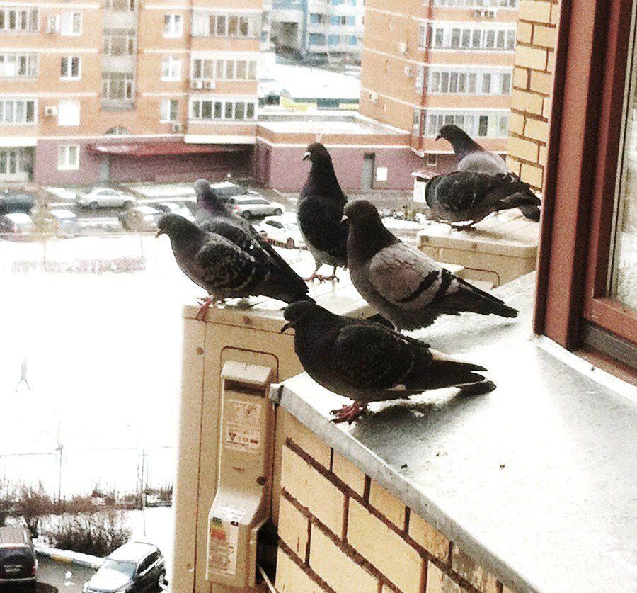 """Защита от птиц от компании """"птицелофф"""". борьба с птицами - р."""